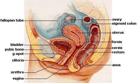 Как выглядит оргазм в вагине